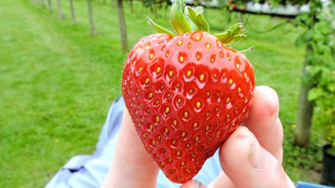 strawberry-2233764_960_720-678x381